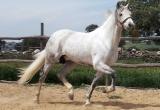 caballos8.jpg