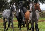 caballos11.jpg