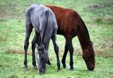 caballos12.jpg