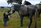 caballos14.jpg